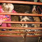 Stroking the little piggies<br/>21 Nov 2007