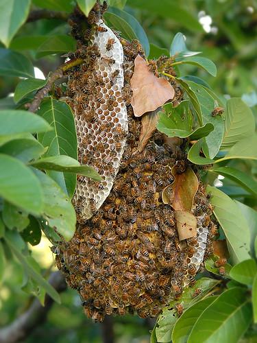Fallen-Hive