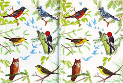 Bird Book photo by Katey Nicosia