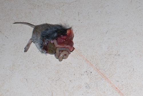 Een ex-muis