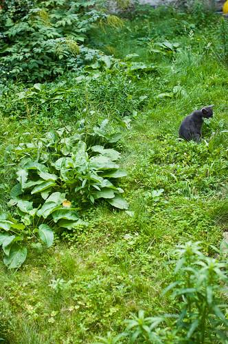 Nephthys in de tuin
