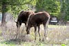 5/18/11 - Mom and child eat breakfast in Teton Village.