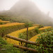 Vietnam-0260 © Bart Plessers
