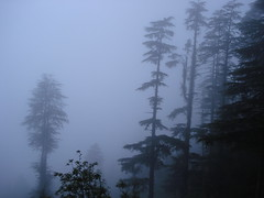Trees clouded photo by gautamnguitar