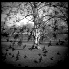the hanging tree photo by swissrolli
