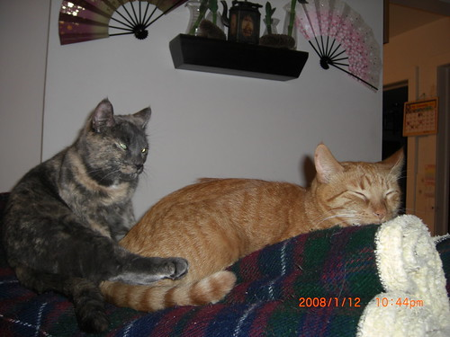 Tiger and Fudgebar on the couch