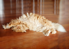 Garfi-My Paws photo by E.L.A