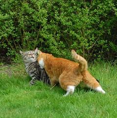 Muffi&Tiger photo by Mats&Muffi