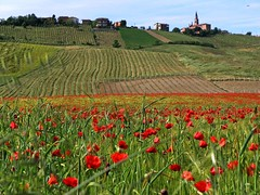 poppies fields photo by Zé Eduardo...
