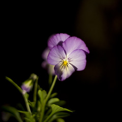 Flower at night photo by .imelda