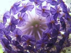 Lace Flower photo by BUN BUKU