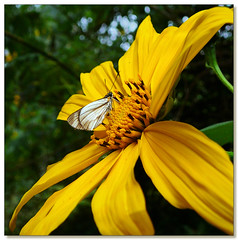 Butterfly photo by JustJan