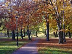 October in Oslo, Norway photo by elysea100