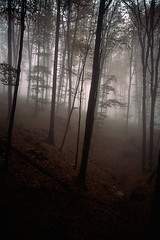 Bükk Mountains (Hungary) - Forest in fog photo by ๑۩๑ V ๑۩๑