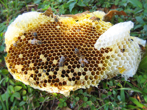 Fallen-Hive-1