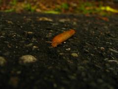 Slug Zone