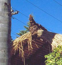 Detail Of Polynesian Hut