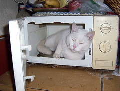 mikrobangu krosnele katinas baltas