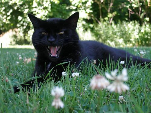 Skat the Cat