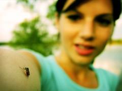 mosquito photo by *helmen