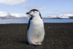A cool penguin