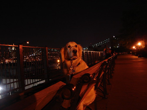 Frisket on the Promenade 11.09.2005