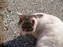 Cat 060122 #02
