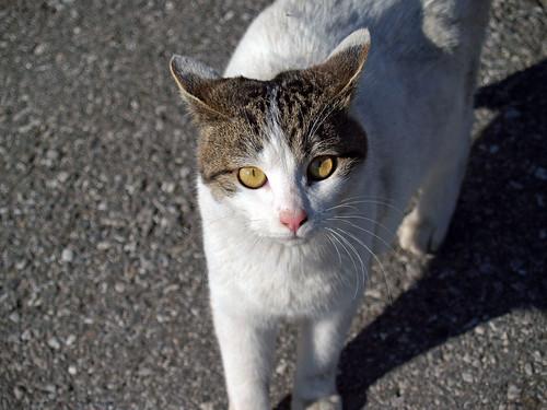 Cat 060122 #03
