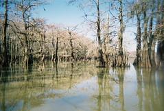 sunswamp