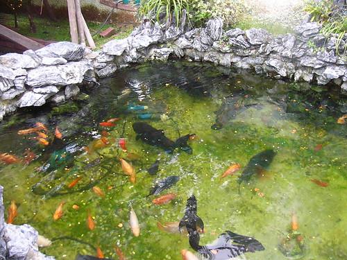 Left pond