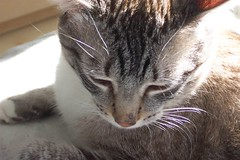 picture of our cat, teddy