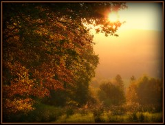 Herbst in Oberberg - autumn near cologne photo by NPPhotographie