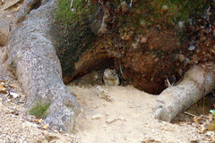 7c. Ground Squirrel Photo