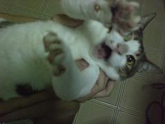 Jackson's Cat 2
