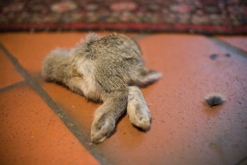 Een half konijn