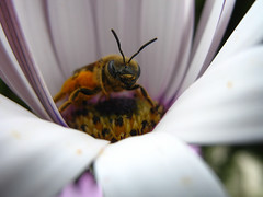 Un regard d'abeille photo by yohann.aberkane