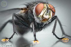 Mega Fly II photo by Cyrus khamak