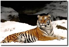 winter stripes photo by tobibritsch