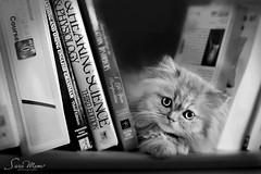 لدي أجوبة كثيرة في الحب لا أبحث لها عن أسئلة ...!!؟   ♥ photo by SaRa Meow  .. / @sosoMeow