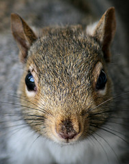 Dirty Little Squirrel photo by shesnuckinfuts