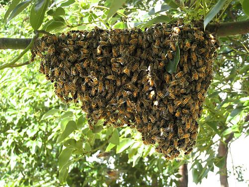 Fallen-Hive-4