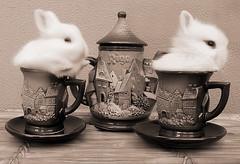 Shaked Milk & Rabbit Tea photo by Firenzesca