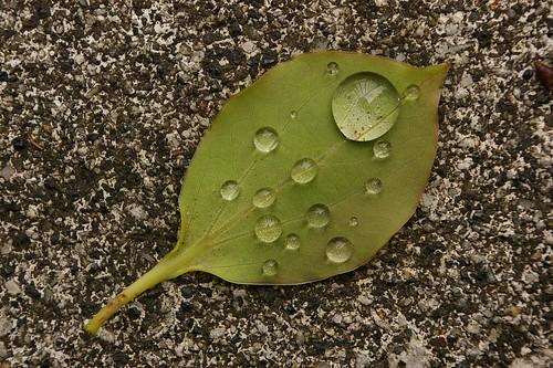 raindrop