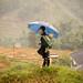 Vietnam-0262 © Bart Plessers