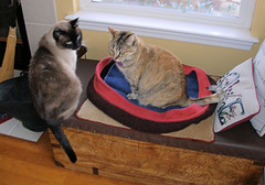 20080128 Cat Bed with Persy and Ruso