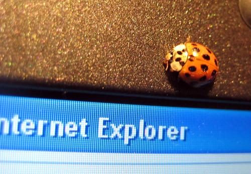 I found a bug on Jessica's browser