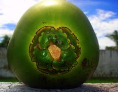 Coco verde photo by Rodrigo Valença