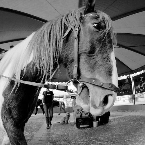 Een paard
