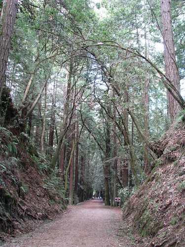 Forest of Nisene Marks, near Santa Cruz (California)