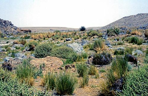 » Barrage Vert Le algérie Elayam 2 stCxBodhQr